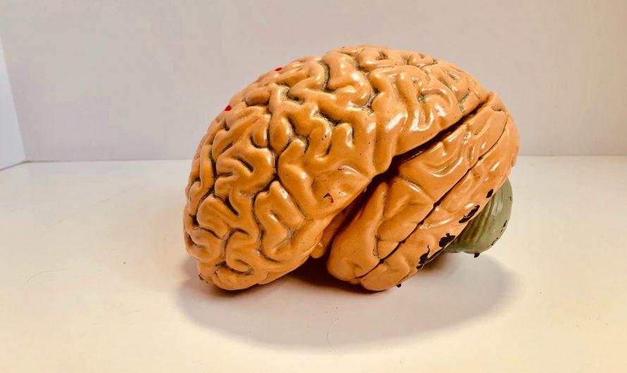 Invertir en cuidar nuestro cerebro